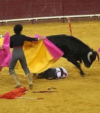 Toros (Foto Tusmedios.es)
