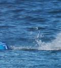 tiburon surfista