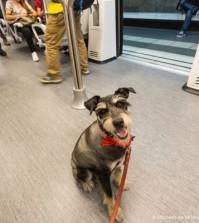 Perro en tren (Foto: srperro.com)