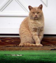 Gato (Fuente: https://www.flickr.com - Nombre del autor de la imagen: ©Steve Baker)